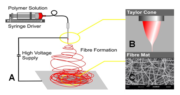 Figure 1. (A & B) Schematic of electrospinning procedure; © SEM image of electrospun polymeric scaffold.